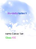 Wonderful turtles!!!
