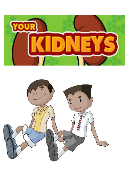 Your kidneys