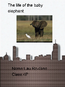The life of the baby elephant
