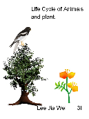 Life Cycle of Animals and Plant