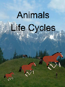 Animals Life Cycles