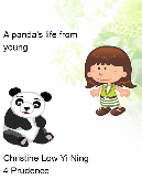 A Panda's life from young