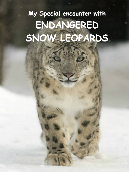 My Special Encounter with Endangered Snow Leopards